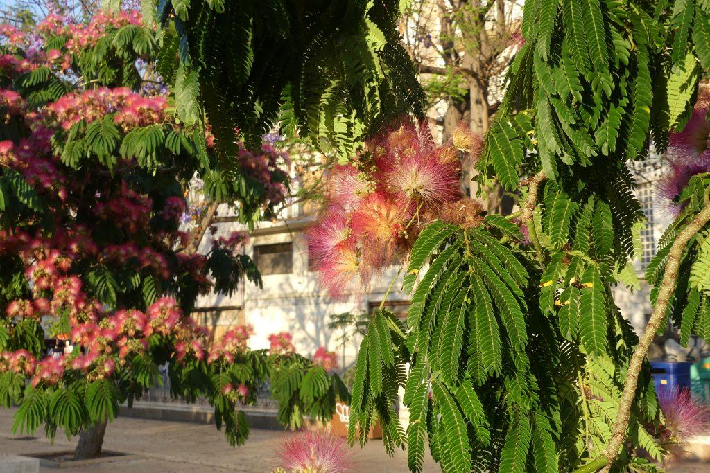 Andalucia travel - Reisebericht Andalusien Marktplatz Malaga Placa de la Merced