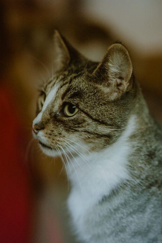 GnadenhofLossa-Vintage and Charity - Tierschutz-Spendenaktion (1)