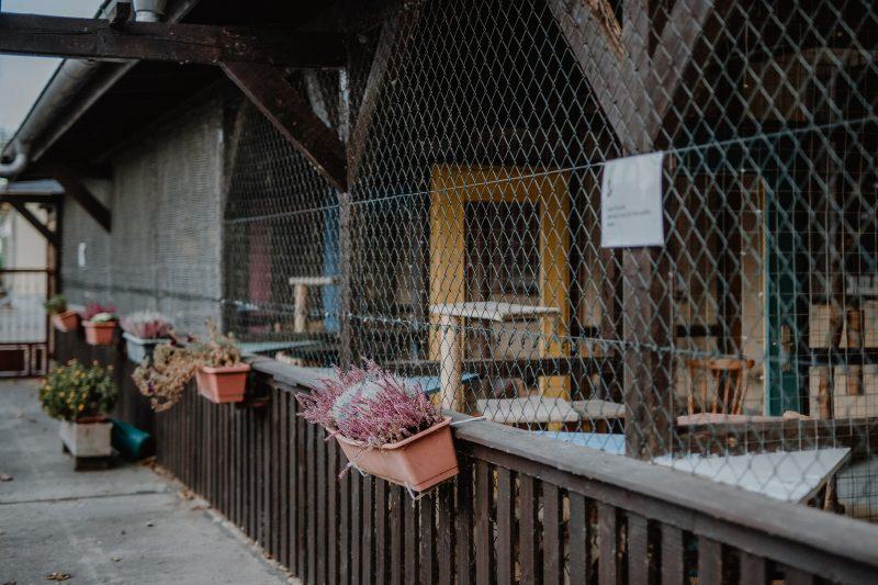 GnadenhofLossa-Vintage and Charity - Tierschutz-Spendenaktion (16)