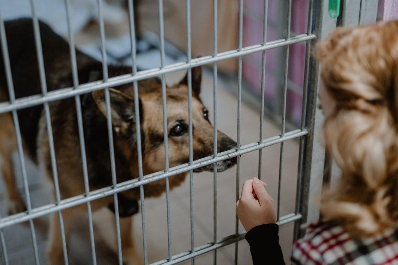 GnadenhofLossa-Vintage and Charity - Tierschutz-Spendenaktion (21)