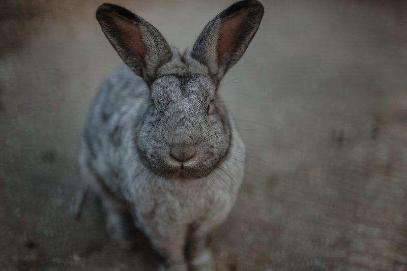 GnadenhofLossa-Vintage and Charity - Tierschutz-Spendenaktion (7)