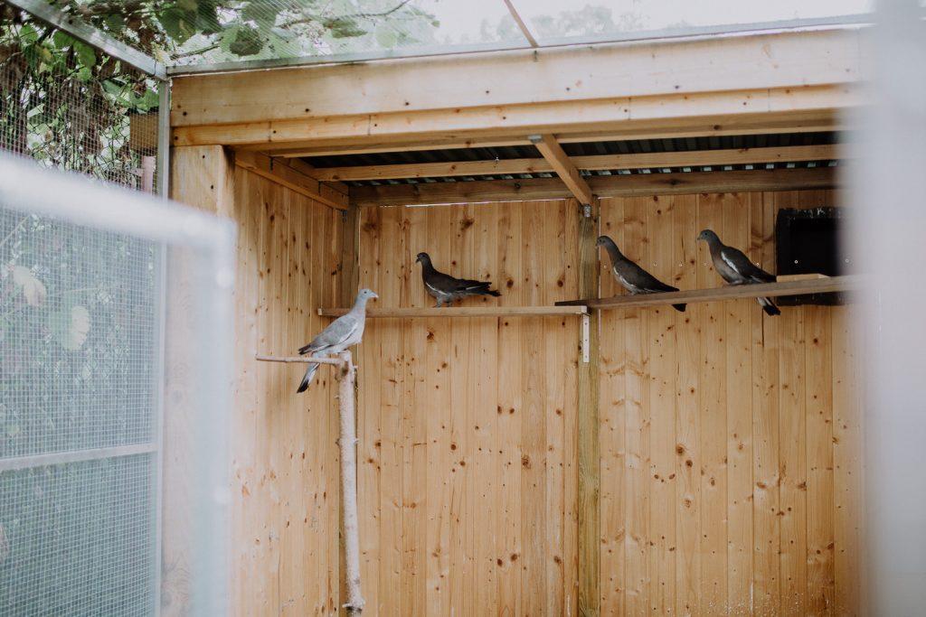 Voliere Wildvogelhilfe Leipzig - Wild Bird Rescue Leipzig (41) small